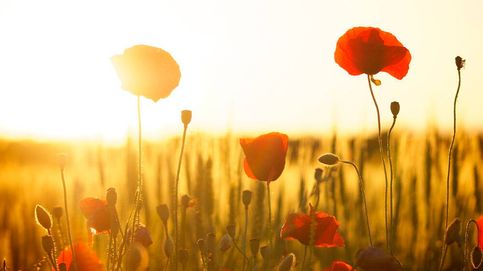 Las plantas y flores más resistentes al sol para terrazas