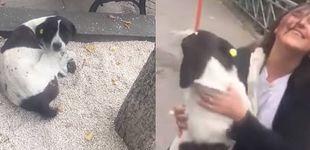 Post de La reacción de un perro perdido durante 3 años al encontrar de nuevo a su familia