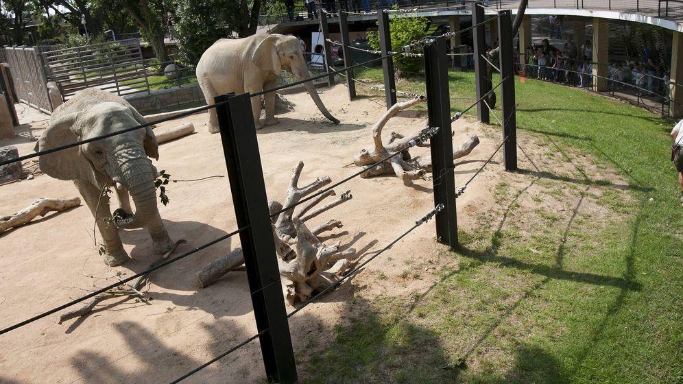Foto: Dos elefantes en el zoo de Barcelona. (EFE)