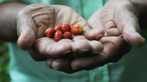 El café, la solución inesperada del Canal de Panamá