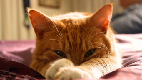 Descubren que puedes comunicarte con tu gato a través del parpadeo lento