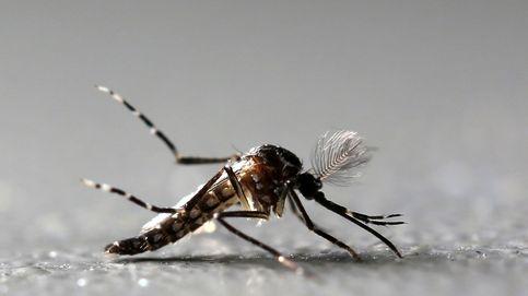 Adiós a los mosquitos: trucos contra las picaduras probados científicamente