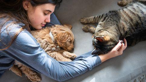 Estos son los pros y los contras de dormir con tus mascotas