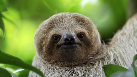 La inesperada verdad sobre los animales: 13 bichos maltratados a los que vas a adorar