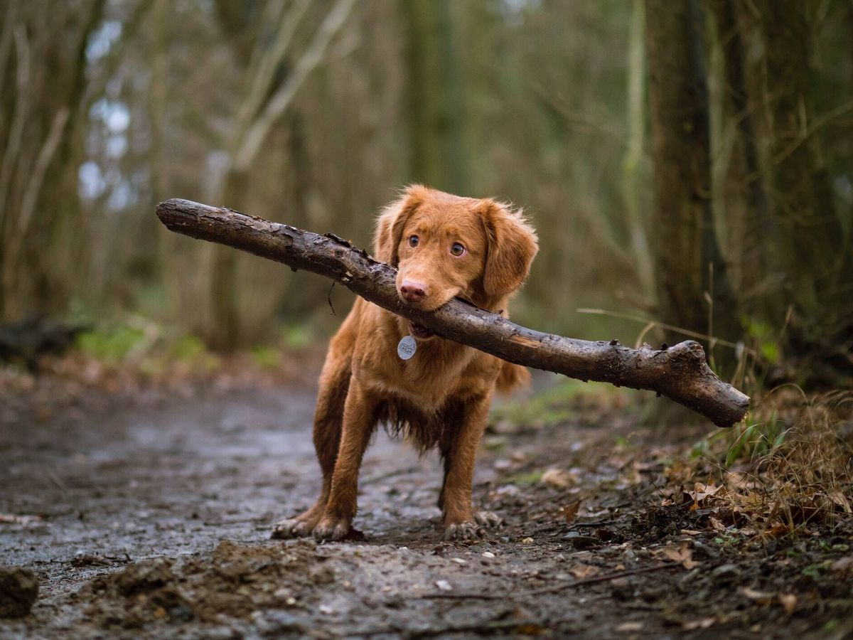 Foto: El can estaba en un campo de golf ubicado a unos pocos kilómetros del lugar en el que se perdió su pista (Unsplash)