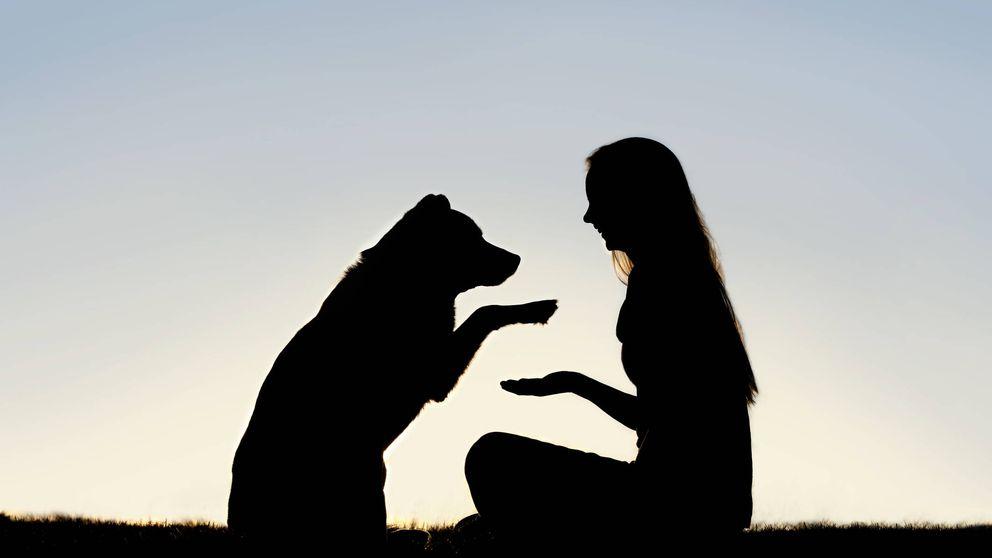 Las cosas que tu perro suele odiar de ti y le encantaría decirte