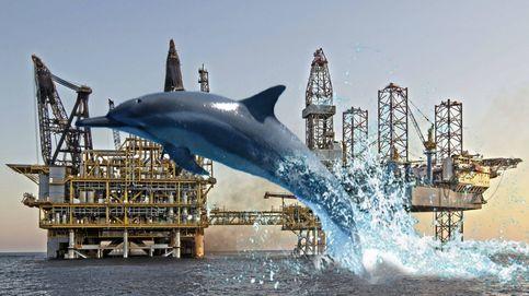 El Gobierno cambia Castor por cetáceos y protege todo el mar entre Alicante y Girona