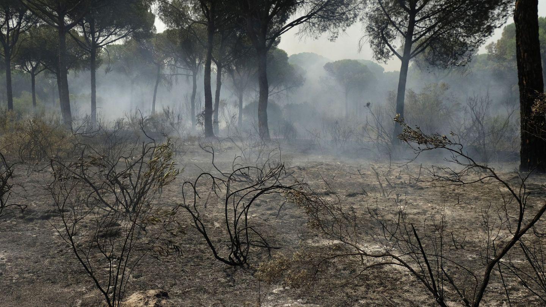 [Pinche aquí para ver las imágenes del incendio del entorno de Doñana]