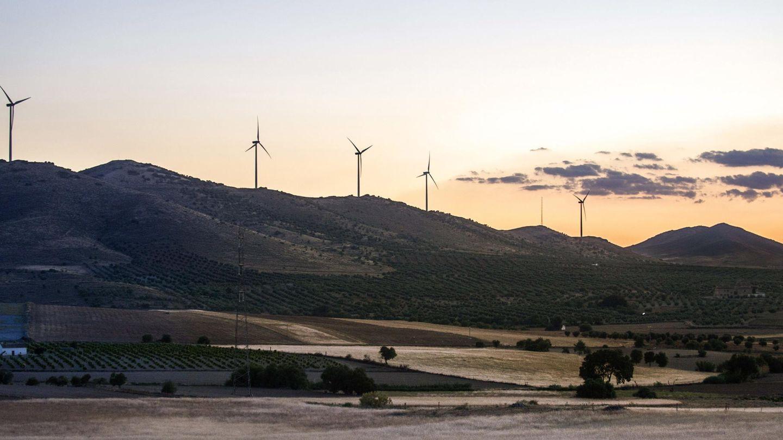Foto de archivo de un parque eólico. (EFE)