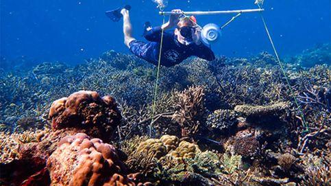 Científicos simulan el sonido de los arrecifes para que los peces acudan