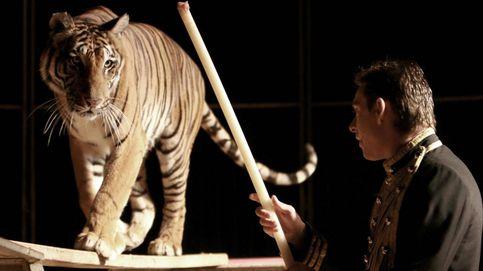 Un domador de circo junto a un tigre.