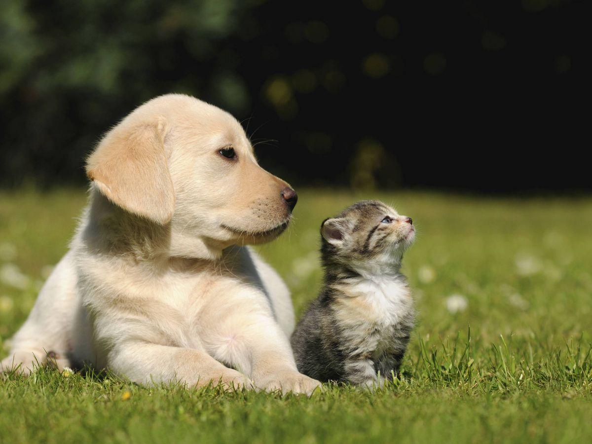 Foto: Gato y perro