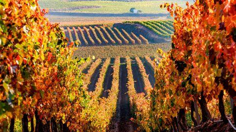 La cosecha del Rioja de 2021