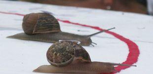 Post de Carreras de caracoles: una costumbre más allá de la pura diversión