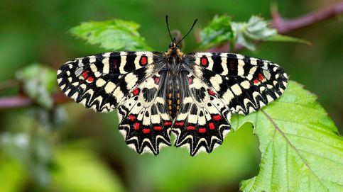 ¿Quién dijo que todo estaba descubierto? Encuentran 71 nuevas especies en 2019