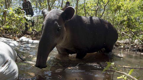 Más de 80 animales son liberados en Nicaragua por el zoo