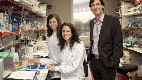 Investigadores de CNIO desarrollan un tratamiento contra la obesidad