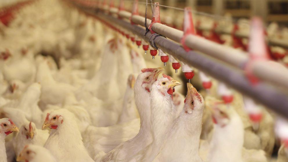 Una investigación sacude la industria alimentaria de EEUU