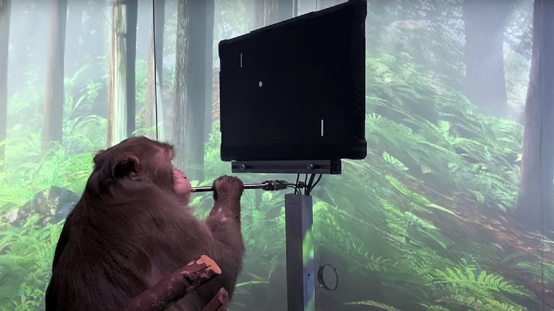 Elon Musk consigue que un macaco maneje videojuegos con la mente
