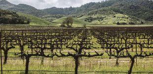 Post de El Silicon Valley del vino: el gran negocio vinícola de Estados Unidos