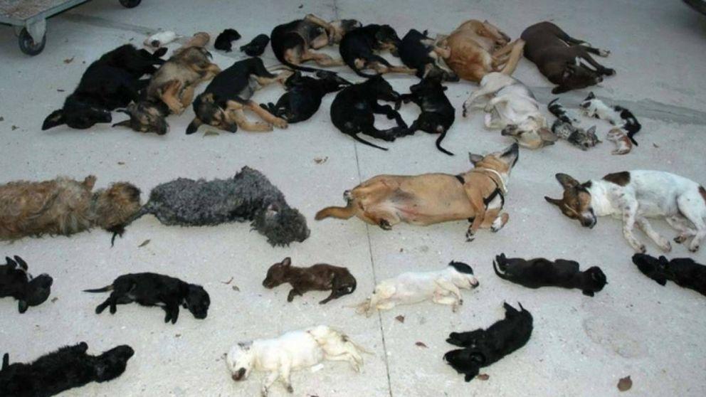 Así asesinó Carmen Marín a 2.183 animales en la 'perrera de los horrores' de Torremolinos