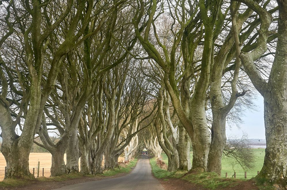 Foto: El camino conocido como Dark Hedges, que apareció en el primer episodio de la segunda temporada de 'Juego de Tronos'. (A.F.L)