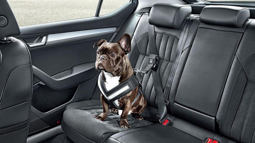 Foto: Cómo viajar con mascotas en el coche