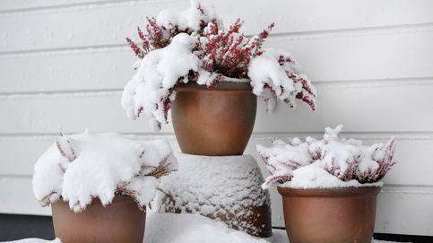Consejos para proteger tus plantas antes y después de sufrir la nieve y el hielo