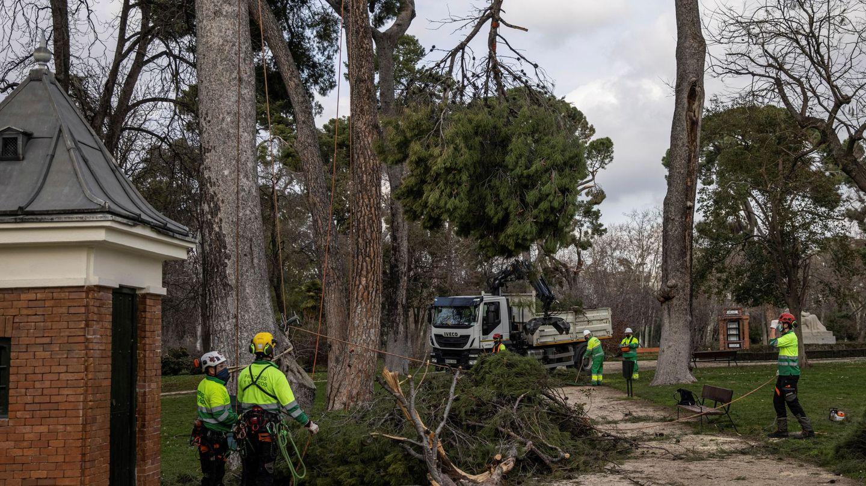 Daños en el arbolado del Parque de El Retiro tras el paso del temporal Filomena (EFE)