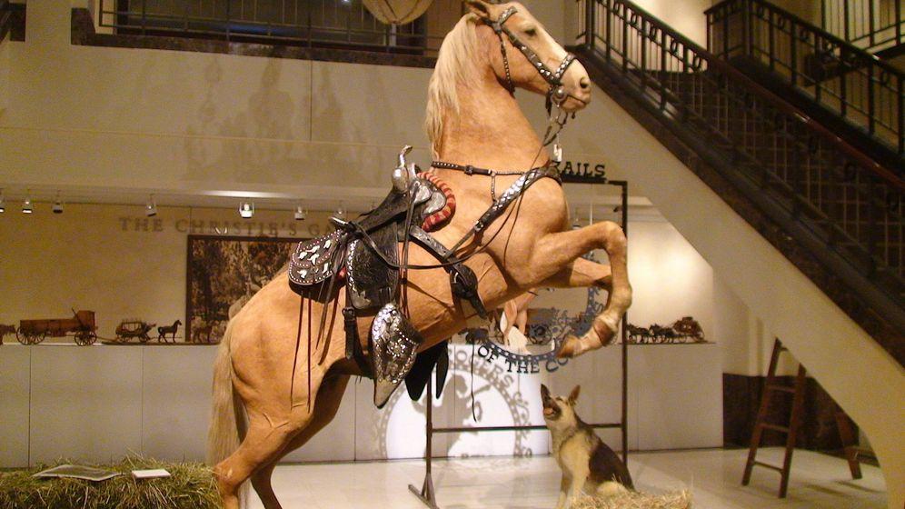 Foto: Fotografía del caballo Trigger, compañero fiel del cowboy Roy Rogers. (EFE)