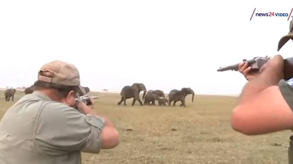 Animales: Una Manada De Elefantes Carga Contra Dos