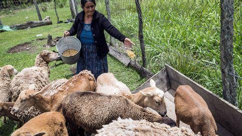 La FAO para impulsar la agricultura ecológica mexicana