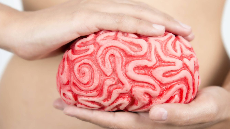 Foto: Nuestro cerebro puede estar más a salvo de prosperar esta investigación (iStock)