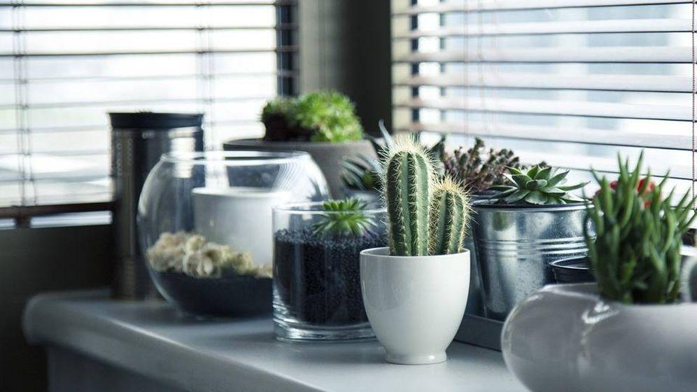 Foto: Plantas de interior. Foto: Pixabay