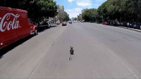 La carrera de un ciclista por salvar a un perro de ser atropellado
