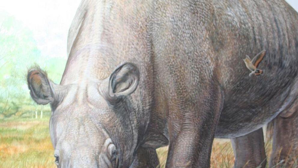 Científicos resuelven el misterio evolutivo que desconcertó a Darwin