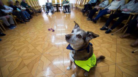 El impuesto al perro llega a España: luces y sombras de una medida polémica