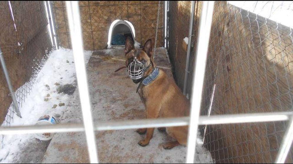 Foto: El perro, atado y dentro de una jaula en plena ola de frío (Foto: Departamento de Policía de Brooklyn Center)
