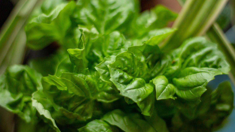 Dieta verde, adelgaza y elimina toxinas. (Bonnie Kittle para Unsplash)