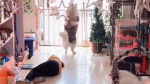 Un perro abre la puerta de su tienda para pedir ayuda para su dueña desmayada