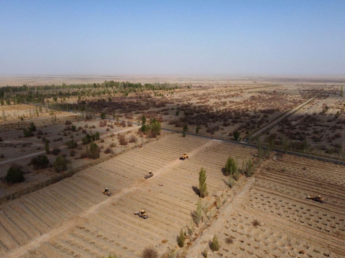 Foto: Proceso de convertir el desierto del Gobi en zona cultivable. (Reuters)
