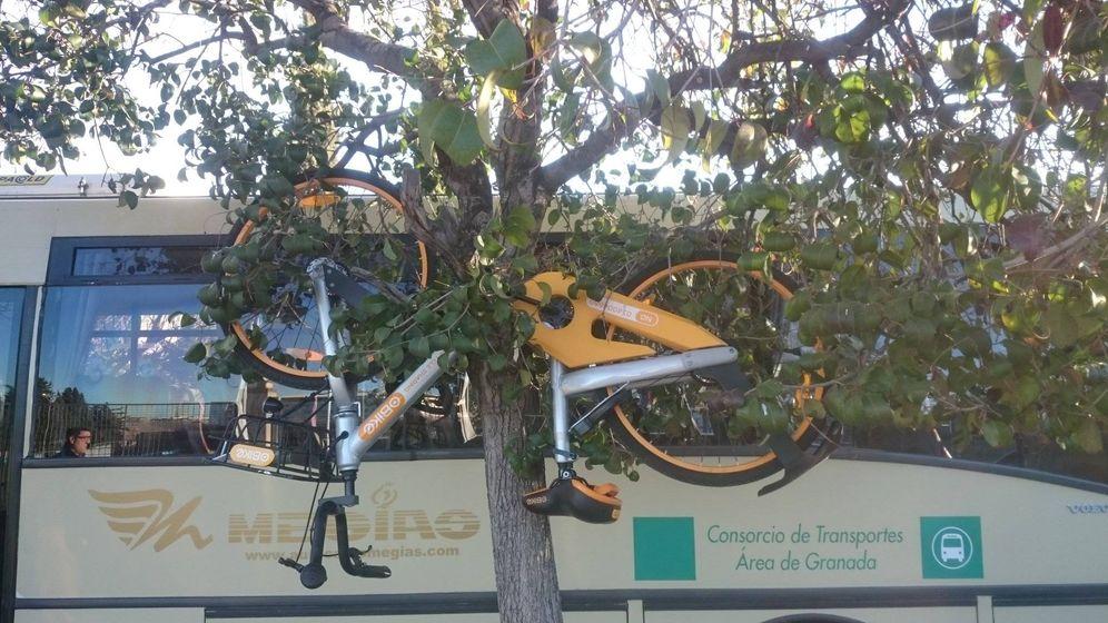 Foto: Bicicleta de oBike colgada de un árbol en Granada (Foto: @daniieson/Twitter)