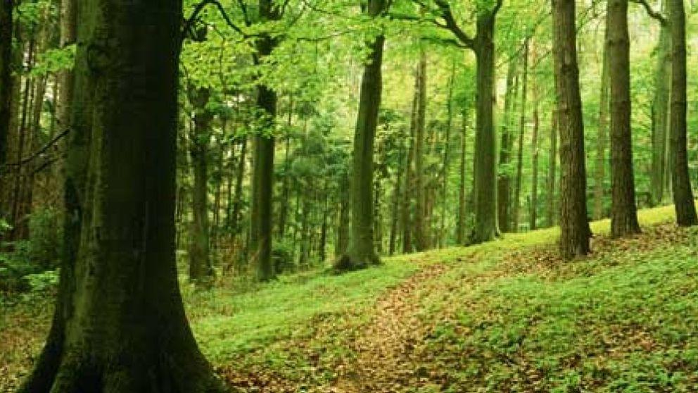 Un joven sin identidad aparece en Berlín tras pasar cinco años en el bosque