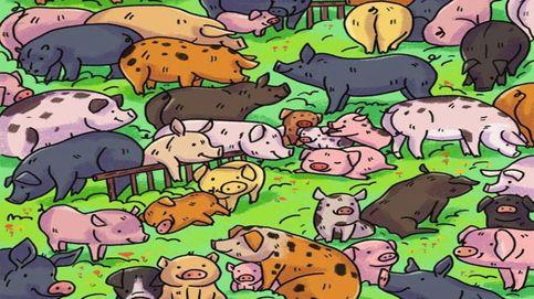 Acertijo viral: ¿eres capaz de encontrar al hipopótamo entre el resto de animales?