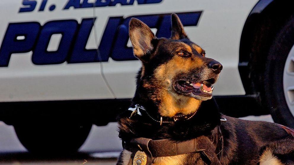 Los perros policía también merecen una jubilación