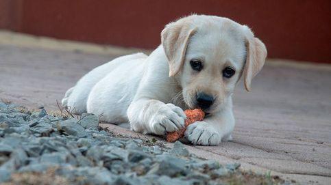 Piensos para perro: calidad porque tu mascota se merece lo mejor