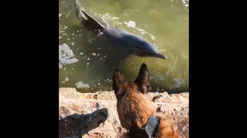 El día en el que un perro policía vio nadar por primera vez a unos delfines