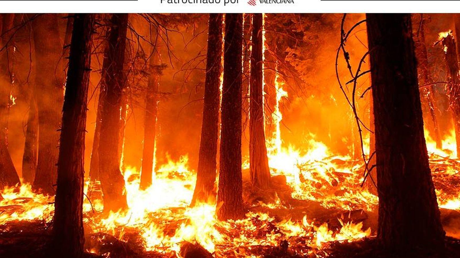 incendios si te vieras rodeado por un incendio forestal