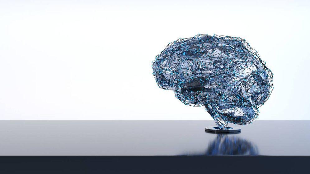 Foto: Un típico cerebro humano. (iStock)