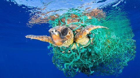 El plástico inunda nuestros océanos: todas las tortugas están contaminadas